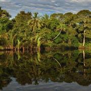 Klias River Reflection