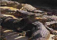 Jong's Crocodile Farm, Kuching, Sarawak