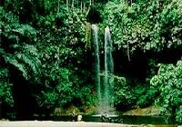 Lambir Hills National Park, Miri, Sarawak
