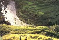 Ubud Bali Expedition, Indonesia