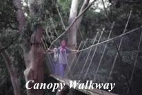 Canopy Walkway, Poring Hot Spring, Sabah Borneo Adventure Vacations