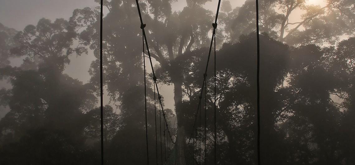 danum valley canopy walk